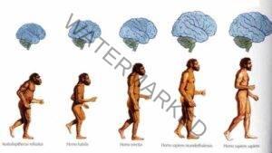 Evoluția omului